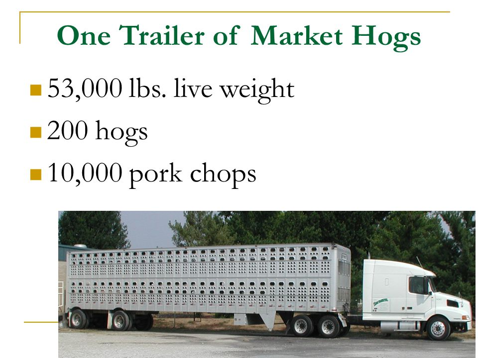One Trailer of Market Hogs