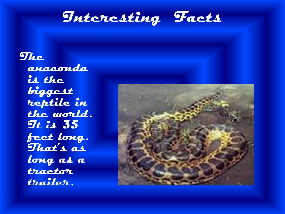 Interesting Facts The anaconda is the biggest reptile in the world.