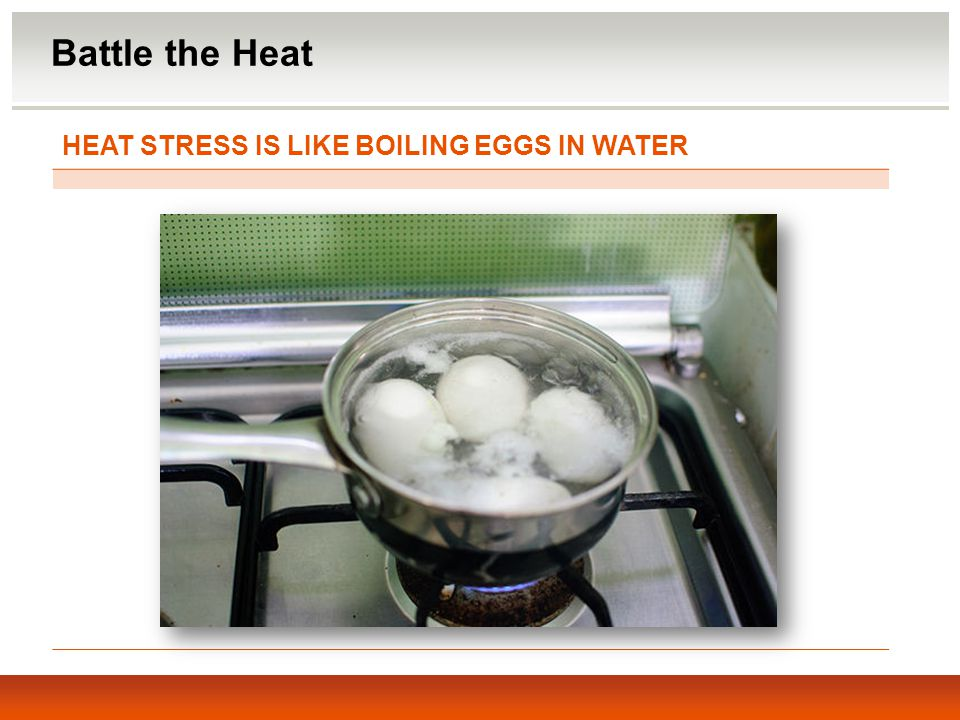 Battle the Heat HEAT STRESS IS LIKE BOILING EGGS IN WATER