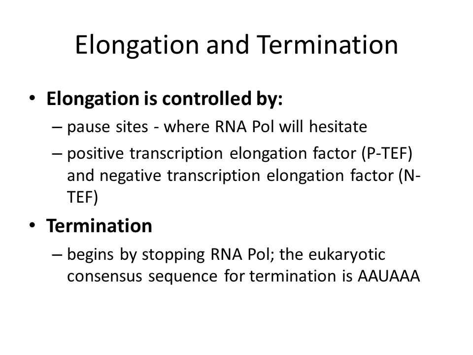 Elongation and Termination