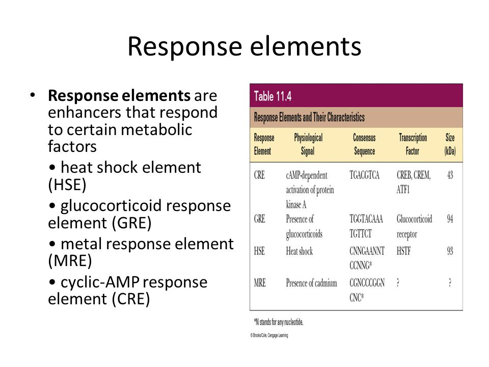 Response elements Response elements are enhancers that respond to certain metabolic factors. • heat shock element (HSE)