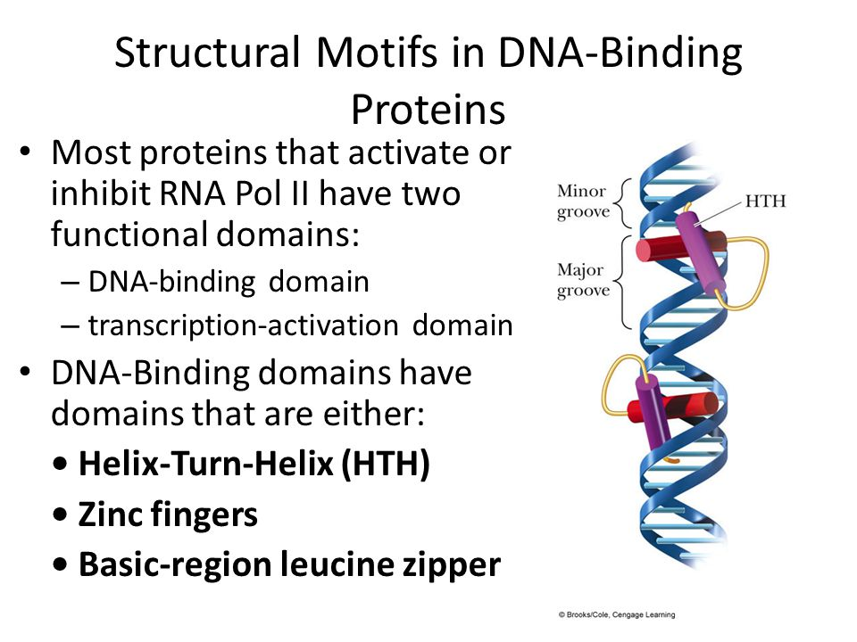 Structural Motifs in DNA-Binding Proteins