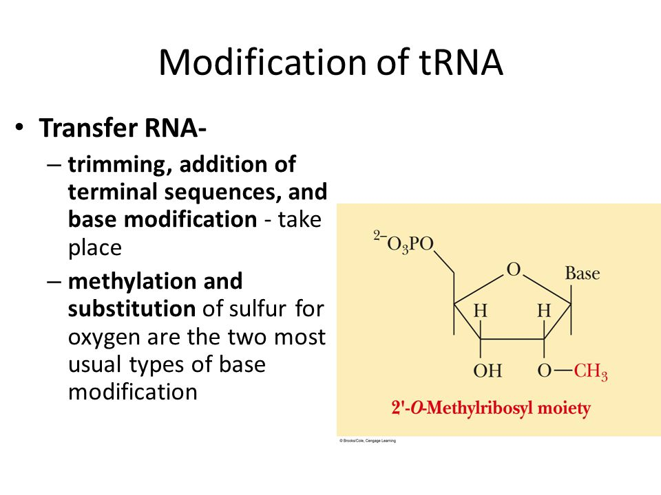 Modification of tRNA Transfer RNA-