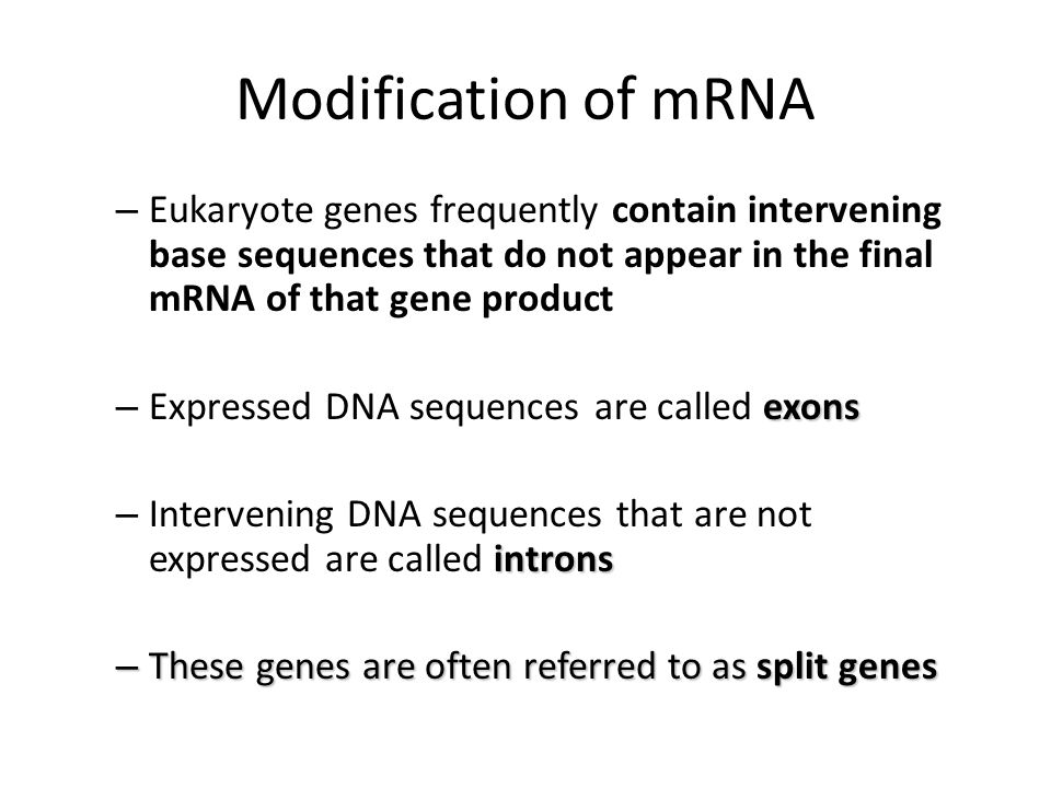 Modification of mRNA Eukaryote genes frequently contain intervening base sequences that do not appear in the final mRNA of that gene product.