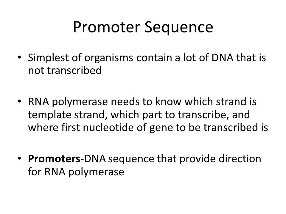 Promoter Sequence Simplest of organisms contain a lot of DNA that is not transcribed.