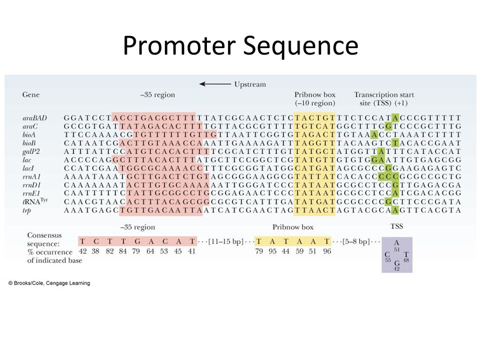 Promoter Sequence