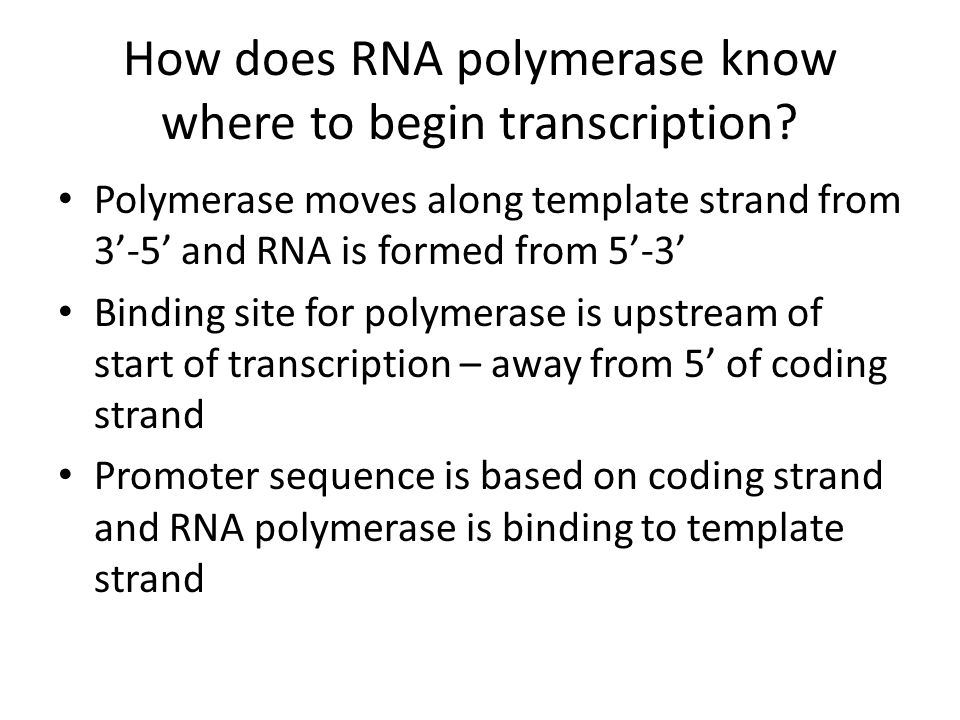 How does RNA polymerase know where to begin transcription