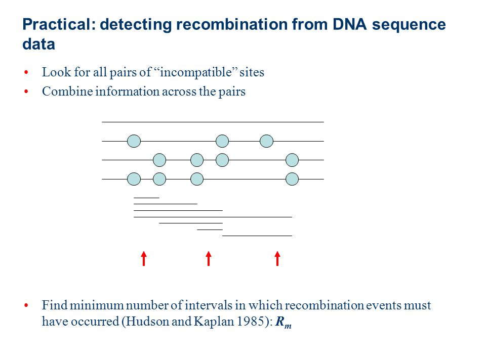 Practical: detecting recombination from DNA sequence data