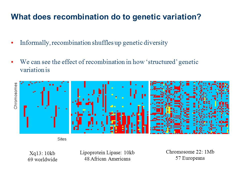 What does recombination do to genetic variation