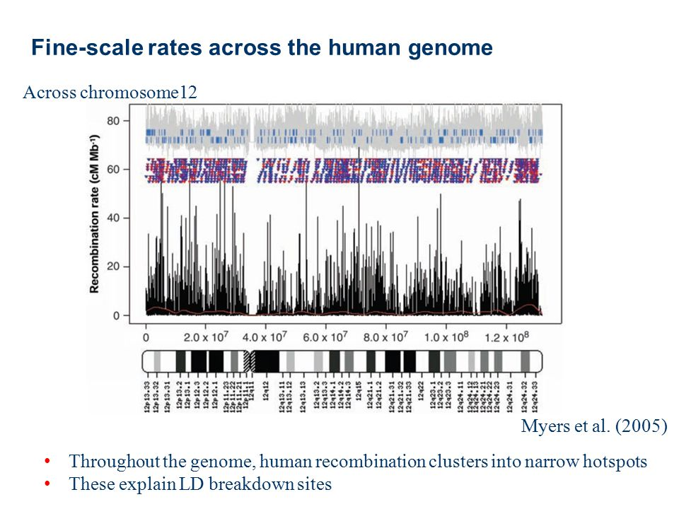 Fine-scale rates across the human genome