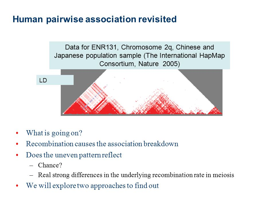 Human pairwise association revisited