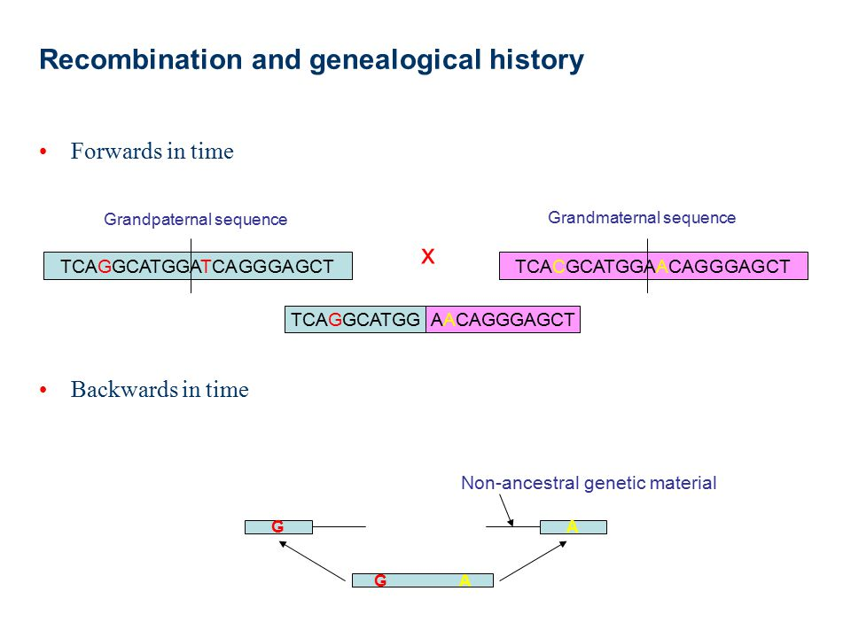 Recombination and genealogical history