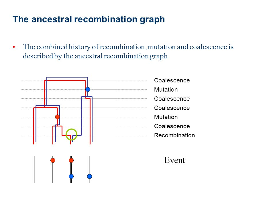 The ancestral recombination graph