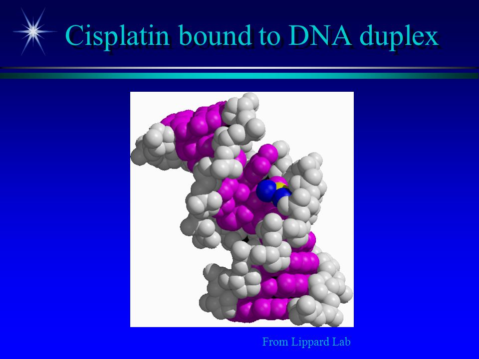 Cisplatin bound to DNA duplex