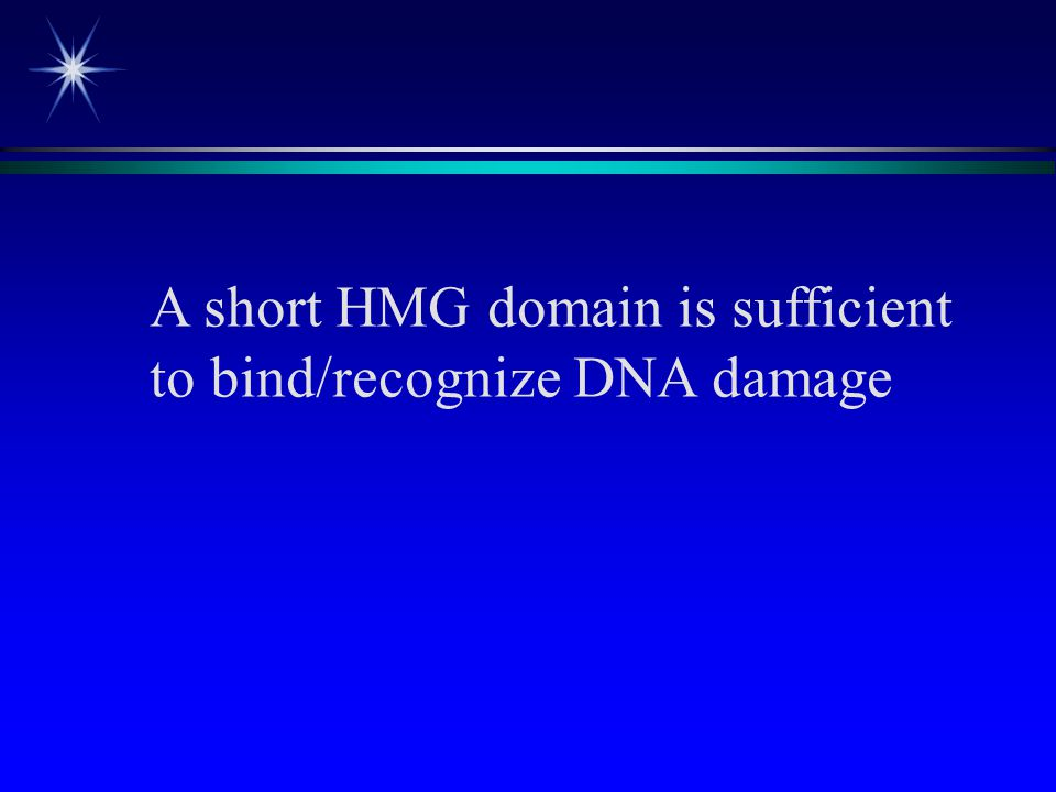 A short HMG domain is sufficient