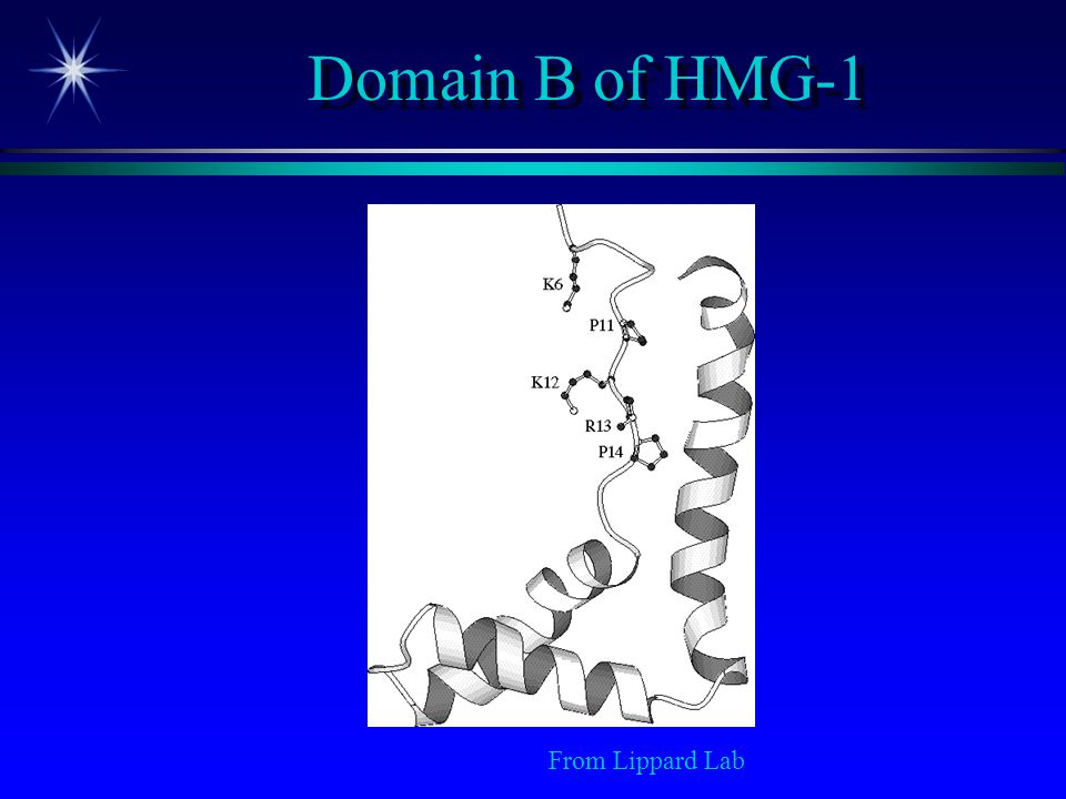 Domain B of HMG-1 From Lippard Lab 19 20 19