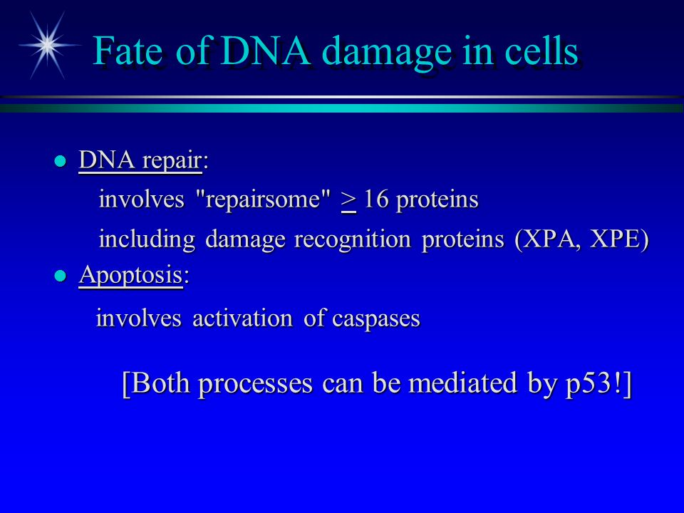 Fate of DNA damage in cells