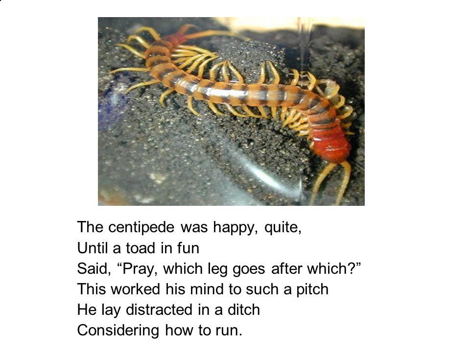 The centipede was happy, quite,