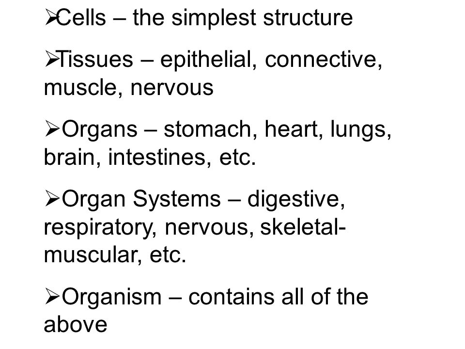 Cells – the simplest structure
