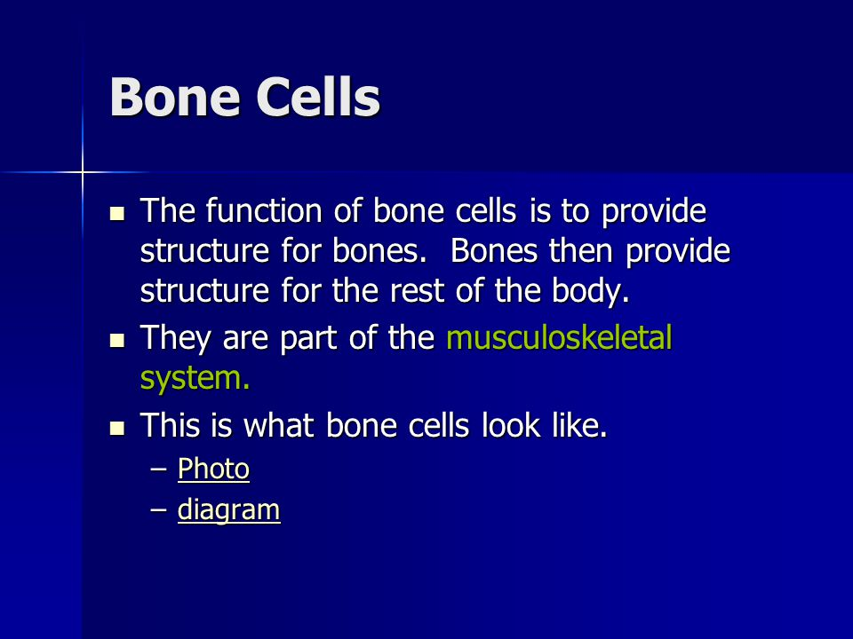 Bone Cells The function of bone cells is to provide structure for bones. Bones then provide structure for the rest of the body.