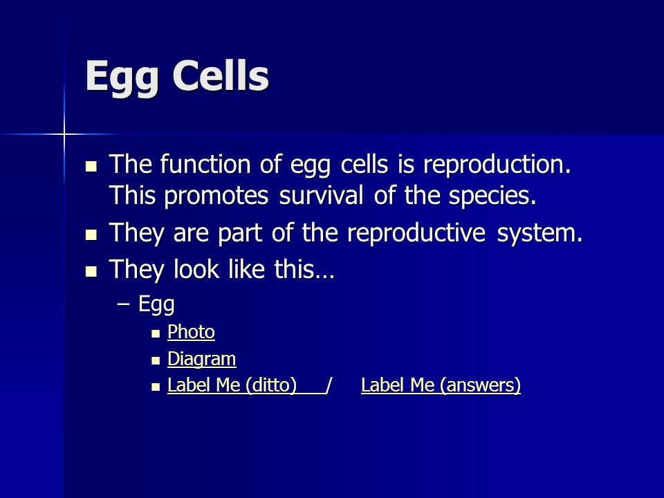Egg Cells The function of egg cells is reproduction. This promotes survival of the species. They are part of the reproductive system.
