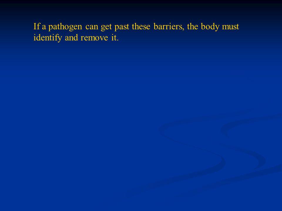 The Phagocytes