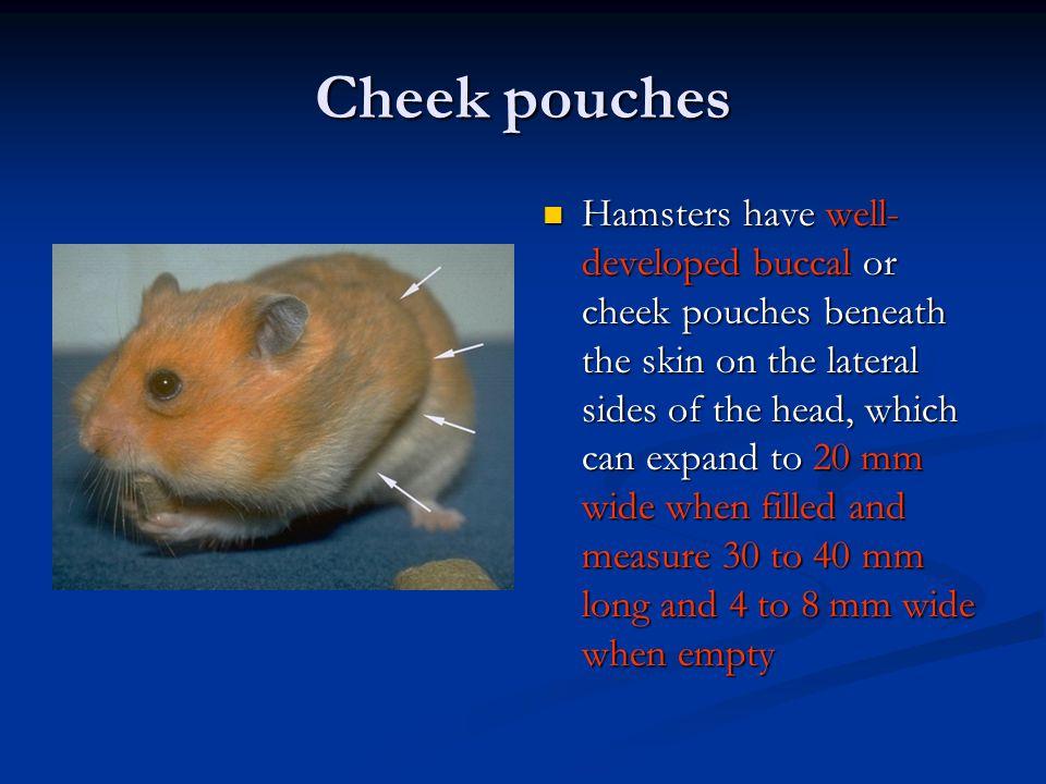 Cheek pouches