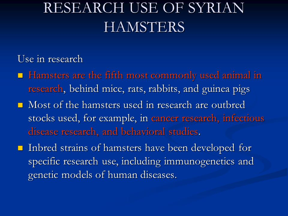 RESEARCH USE OF SYRIAN HAMSTERS