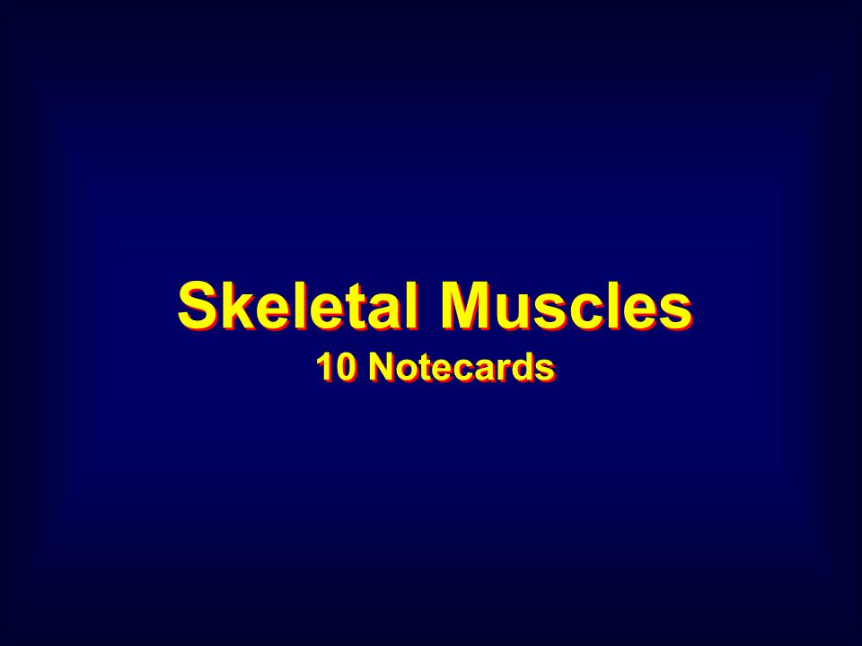 Skeletal Muscles 10 Notecards