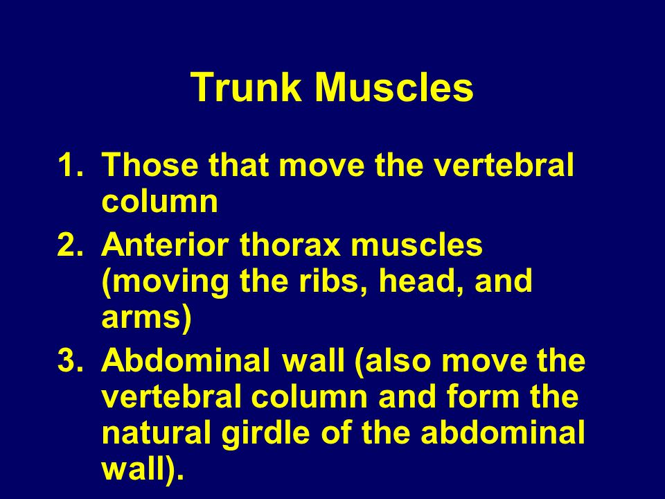 Trunk Muscles Those that move the vertebral column