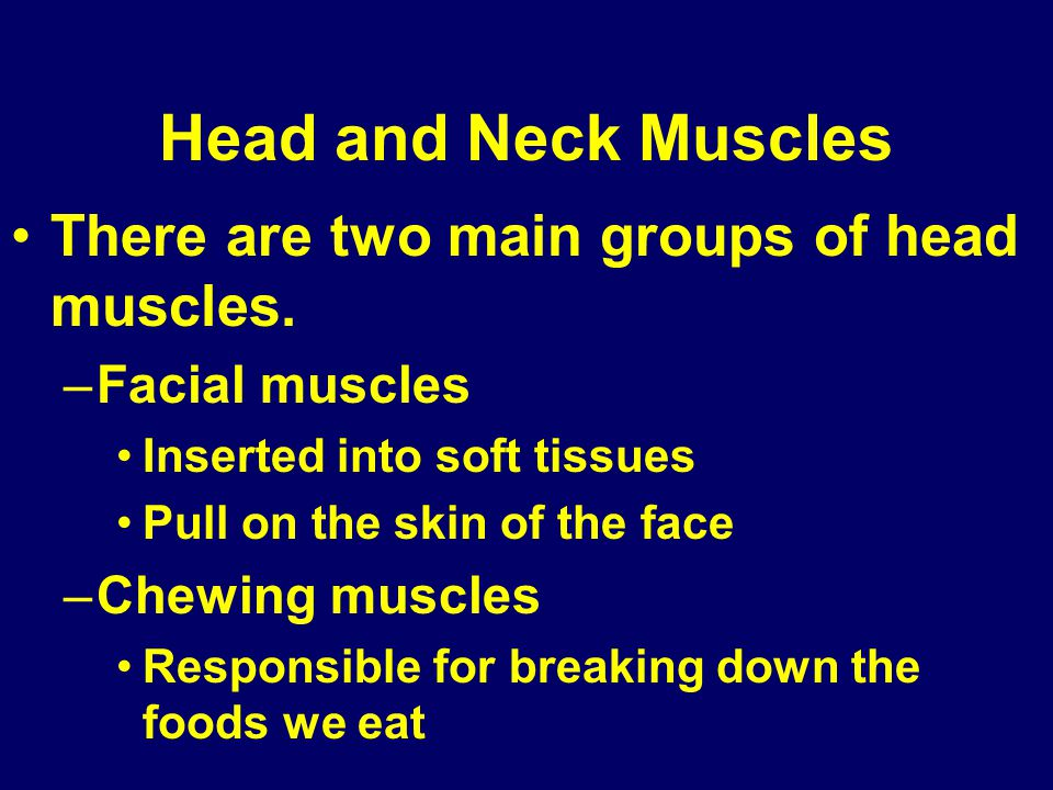 Head and Neck Muscles There are two main groups of head muscles.