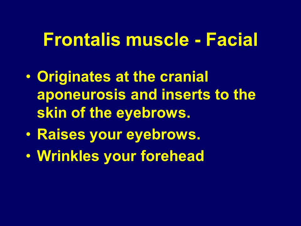 Frontalis muscle - Facial