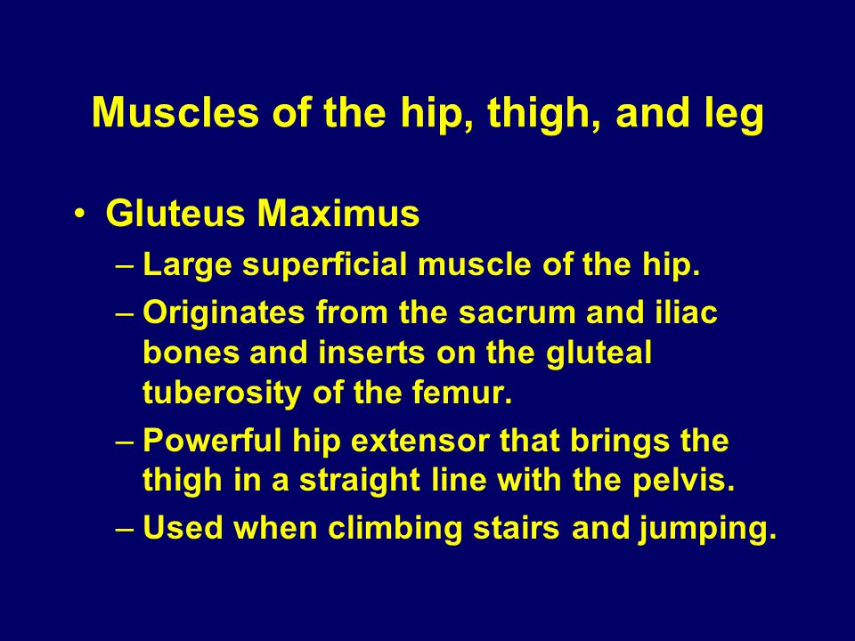 Muscles of the hip, thigh, and leg