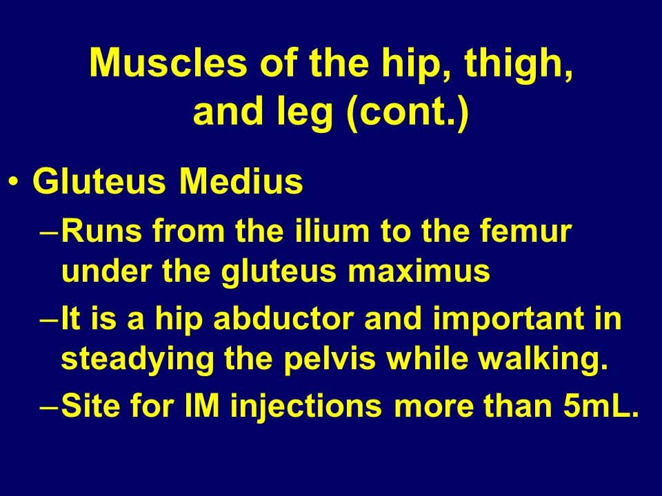 Muscles of the hip, thigh, and leg (cont.)