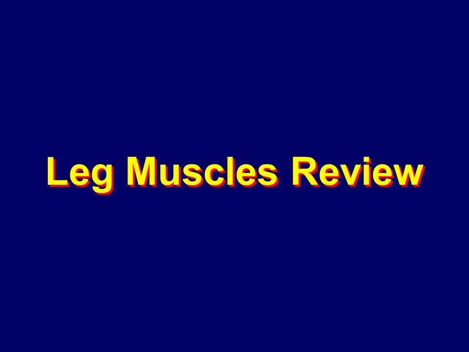 Leg Muscles Review