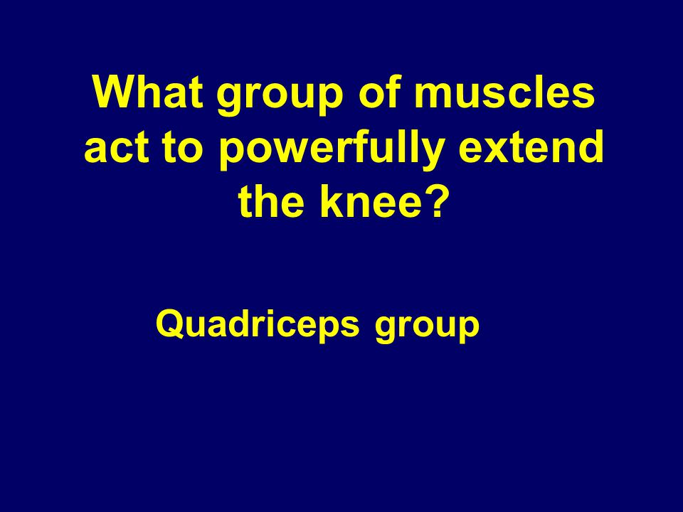 What group of muscles act to powerfully extend the knee