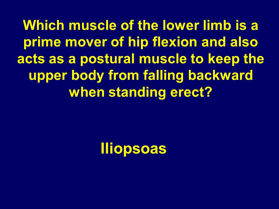 Which muscle of the lower limb is a prime mover of hip flexion and also acts as a postural muscle to keep the upper body from falling backward when standing erect
