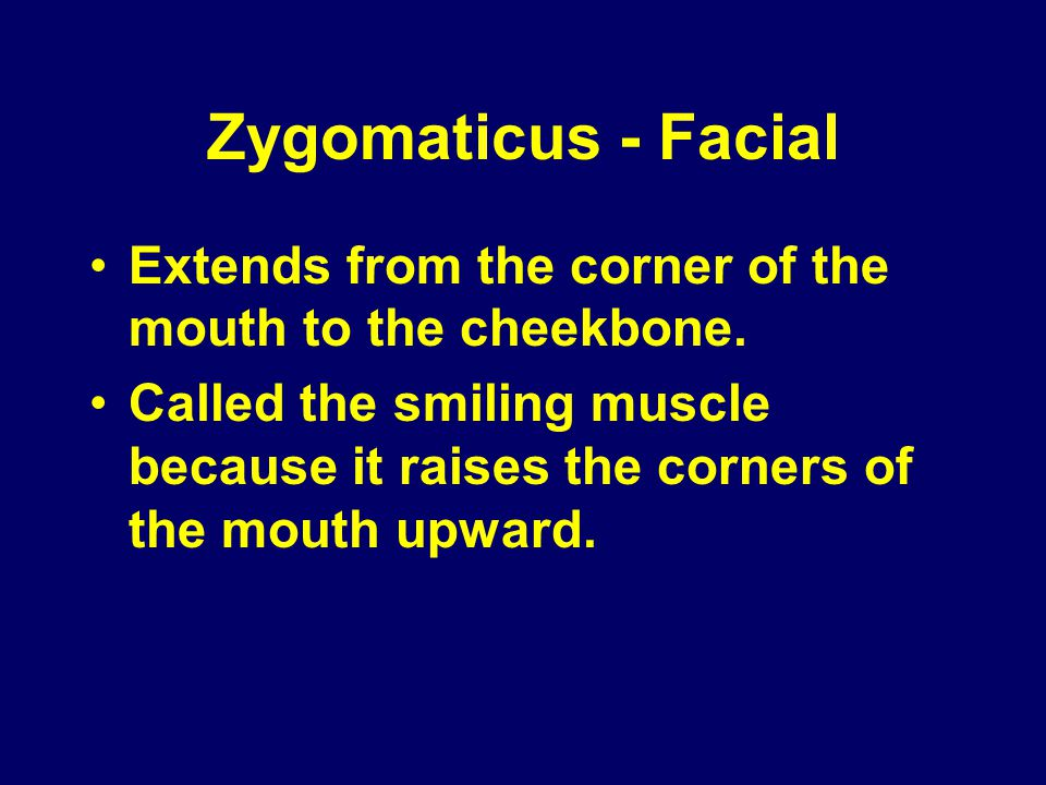 Zygomaticus - Facial Extends from the corner of the mouth to the cheekbone.