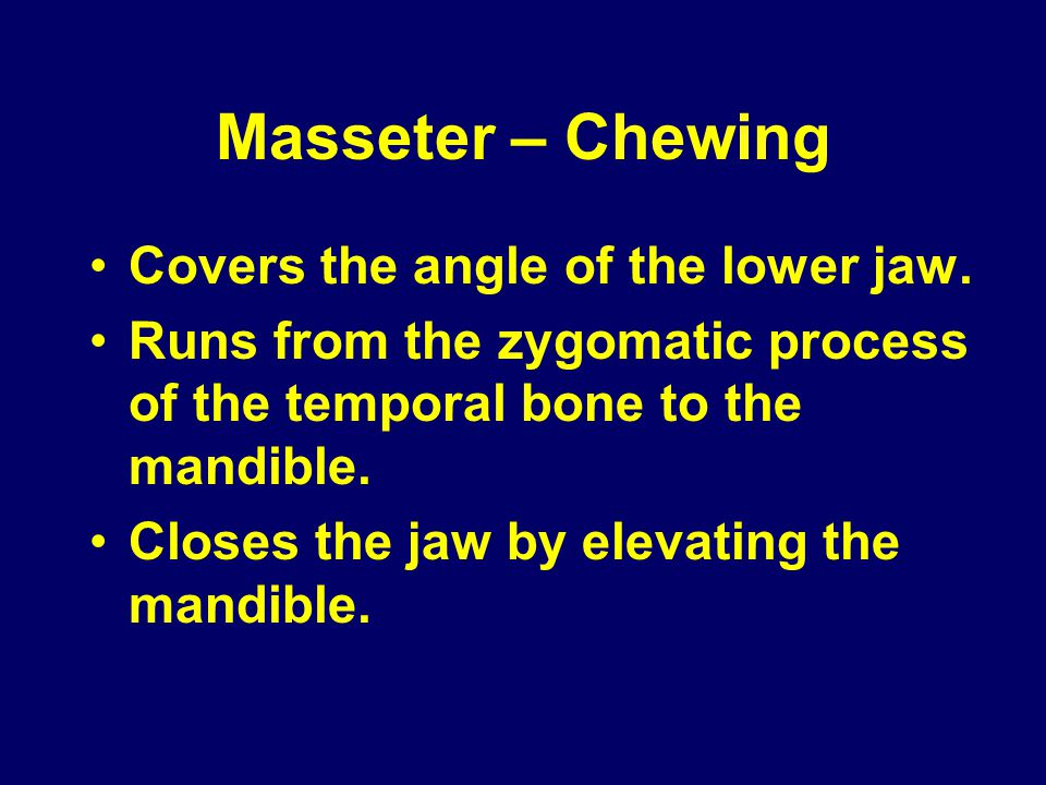Masseter – Chewing Covers the angle of the lower jaw.