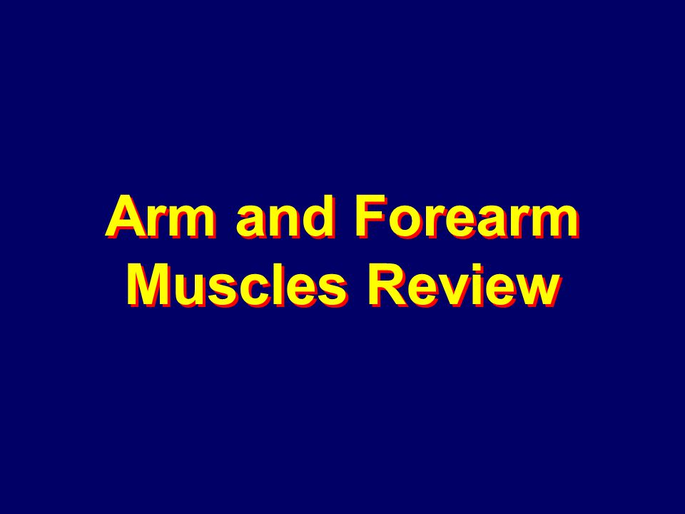 Arm and Forearm Muscles Review