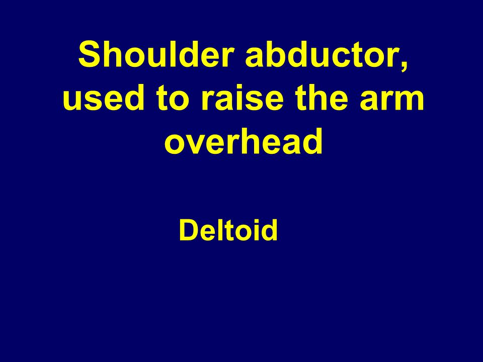 Shoulder abductor, used to raise the arm overhead