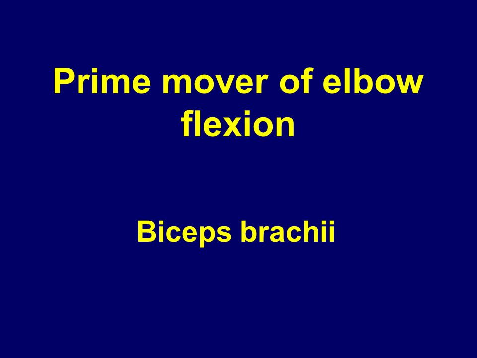 Prime mover of elbow flexion