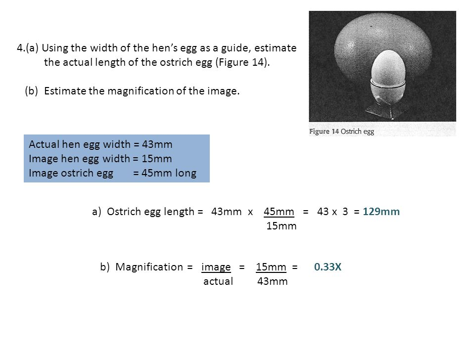 4.(a) Using the width of the hen's egg as a guide, estimate