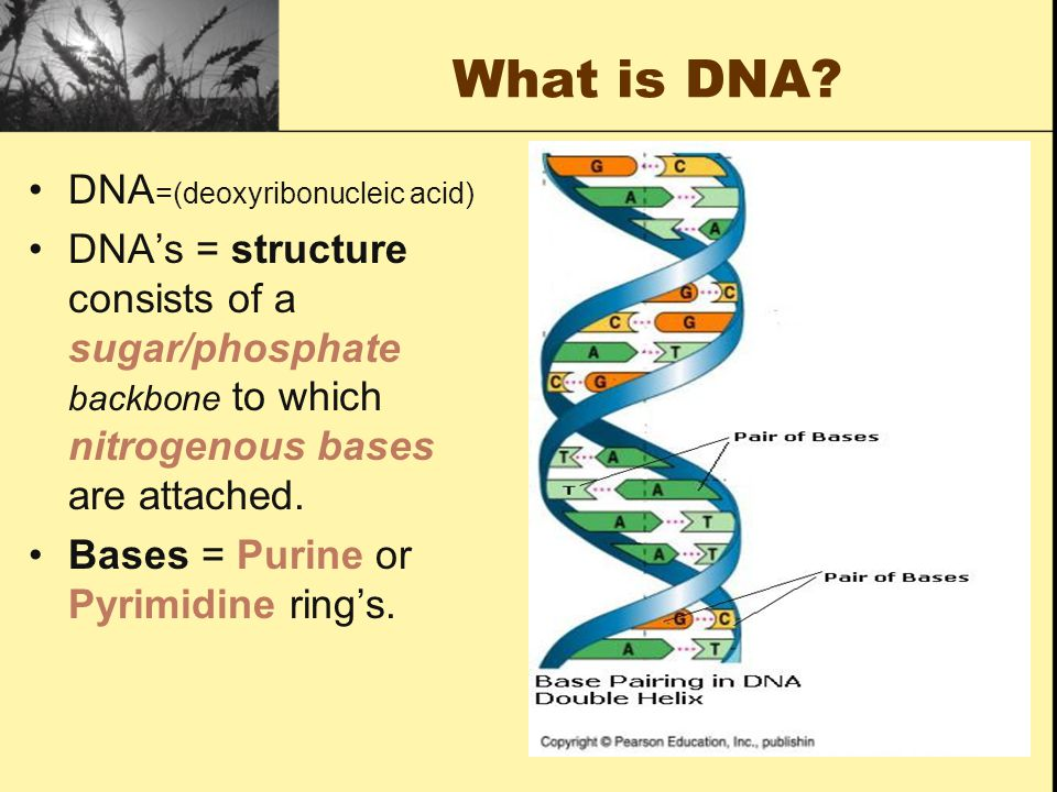 What is DNA DNA=(deoxyribonucleic acid)