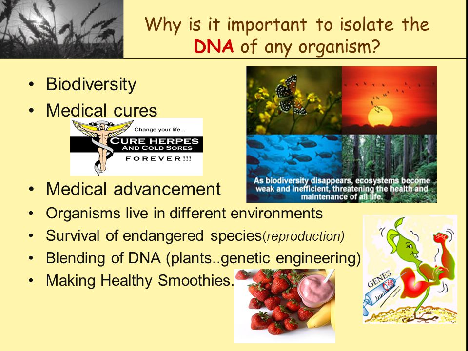Why is it important to isolate the DNA of any organism