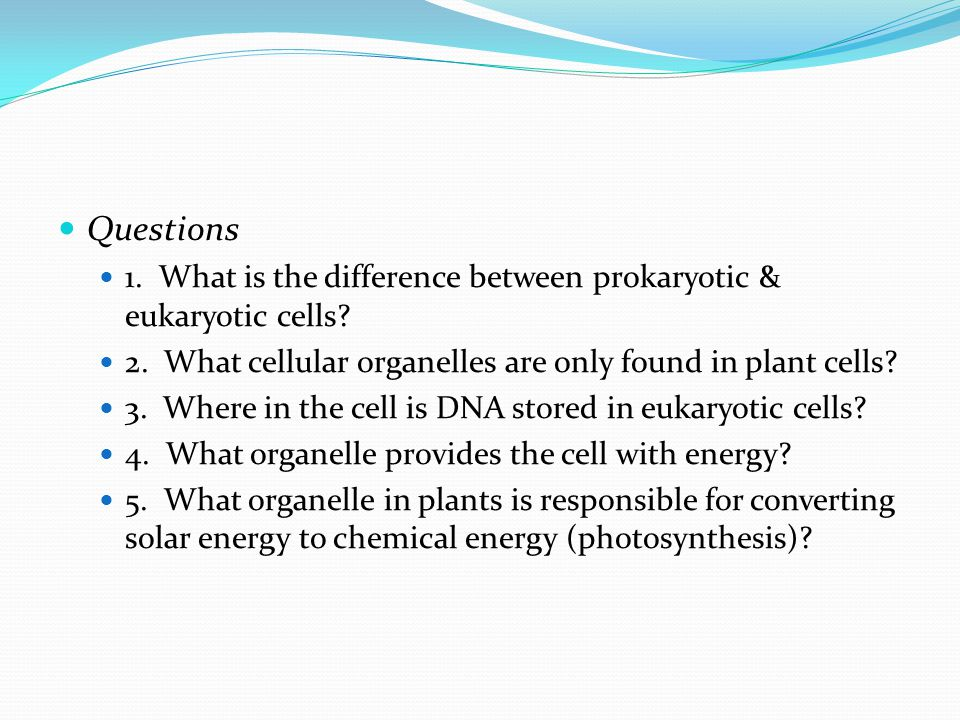 Questions 1. What is the difference between prokaryotic & eukaryotic cells 2. What cellular organelles are only found in plant cells