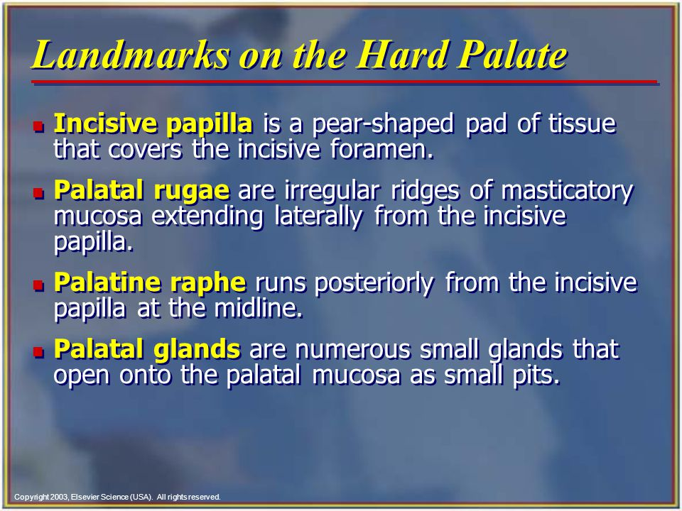 Landmarks on the Hard Palate