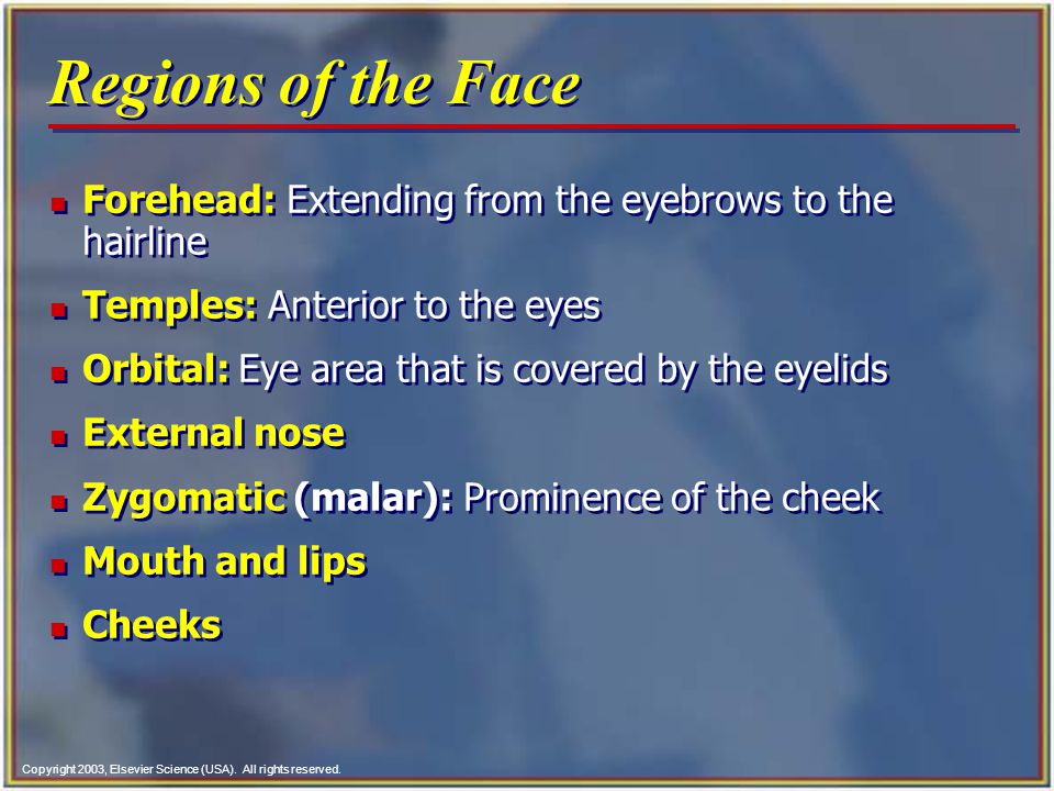 Regions of the Face Forehead: Extending from the eyebrows to the hairline. Temples: Anterior to the eyes.
