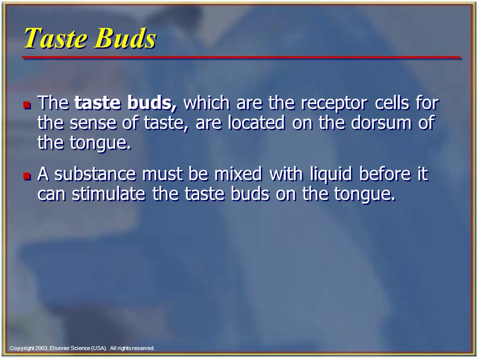 Taste Buds The taste buds, which are the receptor cells for the sense of taste, are located on the dorsum of the tongue.