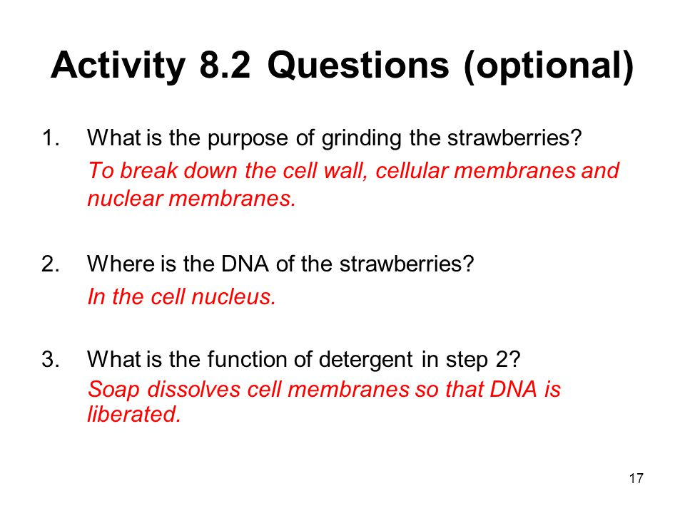 Activity 8.2 Questions (optional)